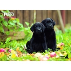 Pets at Home Mixed Puppy A4 Calendar 2018