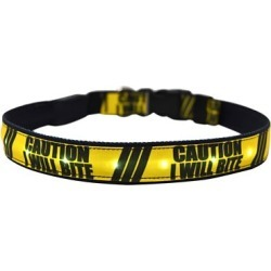 Yellow Dog Design I Will Bite LED Dog Collar found on Bargain Bro Philippines from Tractor Supply for $18.99