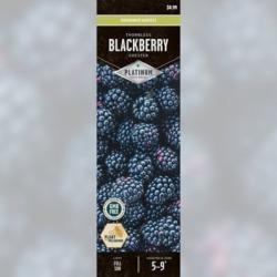 DeGroot Blackberry Chester; 1 Plant