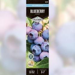 DeGroot Blueberry Patriot; 1 Plant
