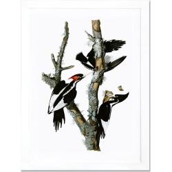 Icanvas 'Ivory Billed Woodpecker' Framed Fine Art Print