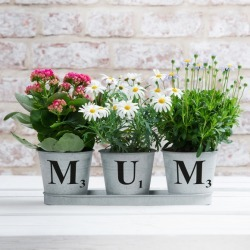 Personalised Zinc Buckets in a Tray (Set of Three)