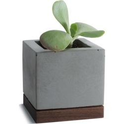 KOMOLAB - Succulent Planter Concrete With Walnut Base