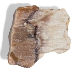YiY - Petrified Wood Token For Yiy Bag