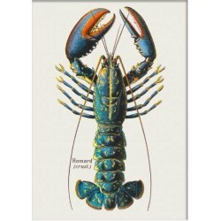 French Lobster Print