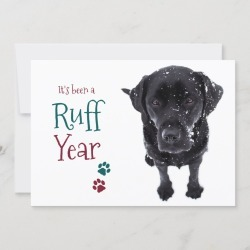 Christmas Card | Ruff Year Funny Pandemic Quarantine Dog Holiday Card found on Bargain Bro Philippines from Zazzle for $2.15