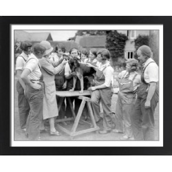 Large Framed Photo. Dog Dentist 1930S found on Bargain Bro Philippines from Media Storehouse for $180.45