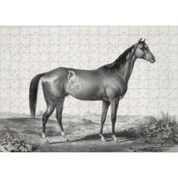 252 Piece Puzzle. Celebrated horse lexington (5 yrs. old) by