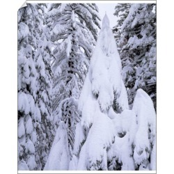 10 inch Photo. USA, California, Sierra Nevad Mountains. A� Snow found on Bargain Bro Philippines from Media Storehouse for $16.64
