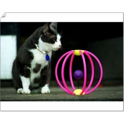 10 inch Photo. Cat toys for Christmas December 1997 cat scatter