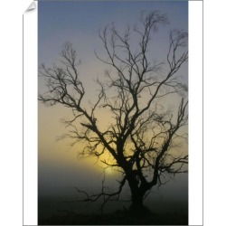 10 inch Photo. Australian Sunrise Misty Tree Silhouette found on Bargain Bro Philippines from Media Storehouse for $16.64