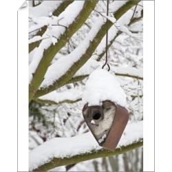 10 inch Photo. USA, Washington, Seabeck. Heart-shaped bird house