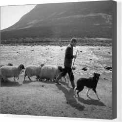 Box Canvas Print. Shepherd with his sheepdog and sheep beside found on Bargain Bro Philippines from Media Storehouse for $177.89