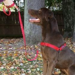 PetSafe Easy Walk Dog Harness Large Black found on Bargain Bro India from StateLineTack.com for $20.95
