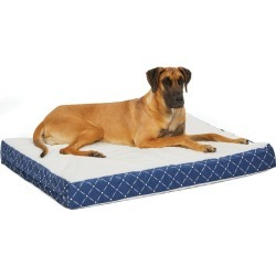 Quiet Time Donovan Blue Ortho Dog Bed 36x48 found on Bargain Bro India from Horse.com for $81.99