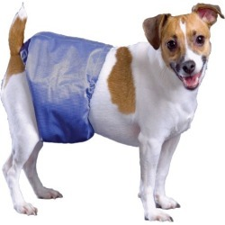 PoochPant Male Dog Wrap Small