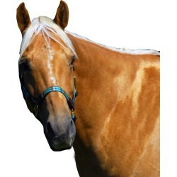 Highland Plaid Halter with Leather Sml Green found on Bargain Bro Philippines from Horse.com for $74.99