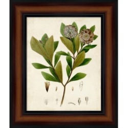 Verdant Foliage V by Vision Studio Framed Art found on Bargain Bro India from Macy's for $149.99
