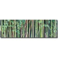 Gregory O'Hanlon Canvas Art - Bamboo Print, 33
