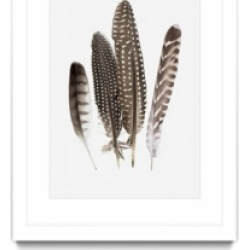 """Giant Art Feathers Ii Matted and Framed Art Print, 36"""" x 52"""""""