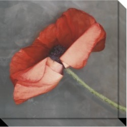 Amanti Art Rouge Poppy Canvas Art Gallery Wrap