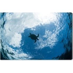 Oliver Gal Green Sea Turtle From Below by David Fleetham Canvas Art, 45