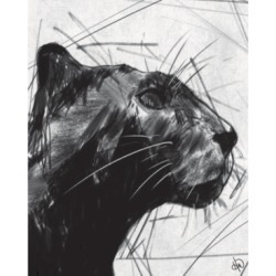 """Creative Gallery Black Panther Portrait on White 36"""" x 24"""" Canvas Wall Art Print"""
