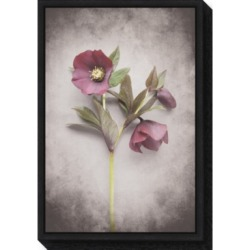 Amanti Art Vintage Hellebore Study V by Felicity Bradley Canvas Framed Art found on Bargain Bro Philippines from Macy's Australia for $91.69