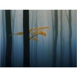 "Veselin Atanasov Yellow Leaves on Branch Canvas Art - 20"" x 25"""