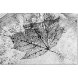 Jason Shaffer 'Encased in Ice' Canvas Art - 24