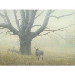 """Michael Budden Winter Mist Buck Canvas Art - 37"""" x 49"""""""
