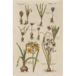 Wild Apple Portfolio Vintage Florilegium Ii Canvas Art - 20