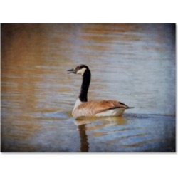 Jai Johnson 'Canadian Goose In The Water' Canvas Art - 32