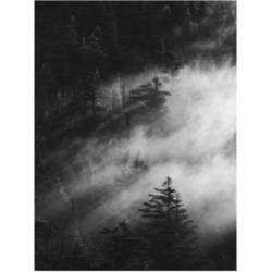 Design Fabrikken Misty Pine Woods Fabrikken Canvas Art - 19.5
