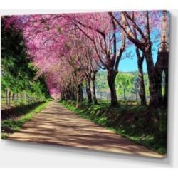 "Designart Cherry Blossom Pathway In Chiang Mai Canvas Art Print - 32"" X 16"""