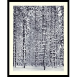 Amanti Art Pine Forest In The Snow, Yosemite National Park Framed Art Print