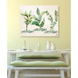 "Creative Gallery Herb Trio in Green on Tan 20"" x 24"" Acrylic Wall Art Print"
