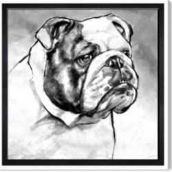 "Oliver Gal English Bulldog Canvas Art, 16"" x 16"""