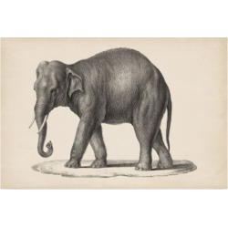 Brodtmann Brodtmann Elephant Canvas Art - 15.5