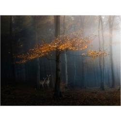 "Veselin Atanasov Orange Leaves on Branch Canvas Art - 37"" x 49"""