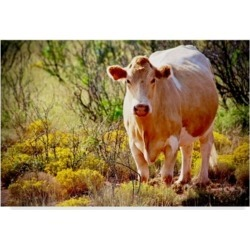 "American School Lone Cow in New Mexico Canvas Art - 37"" x 49"""