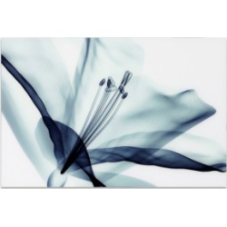 Empire Art Direct 'Amaryllis' Frameless Free Floating Tempered Glass Panel Graphic Wall Art - 32