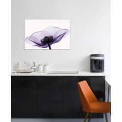 """iCanvas """"Anemone Ii"""" by Robert Coop Gallery-Wrapped Canvas Print (26 x 40 x 0.75)"""
