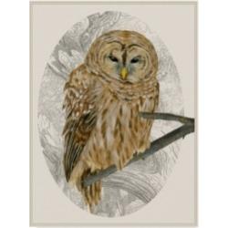 Melissa Wang Barred Owl I Canvas Art - 20