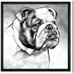 "Oliver Gal English Bulldog Canvas Art, 43"" x 43"""