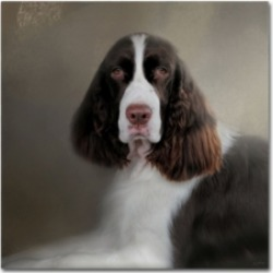 "Jai Johnson 'Waiting Patiently English Springer Spaniel' Canvas Art - 14"" x 14"" x 2"""
