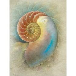 Steve Hunziker Aquatica Ii Canvas Art - 27
