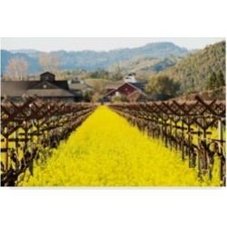 "Lance Kuehne 'Napa Valley In Winter' Canvas Art - 12"" x 19"""