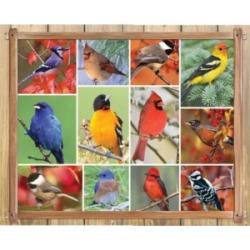 Springbok Puzzles Songbirds 1000 Piece Jigsaw Puzzle
