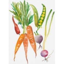 Chariklia Zarris Harvest Medley Iv Canvas Art - 20